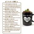 画像5: 名入れ マグカップ カフェマグ 彫刻無料 タオル付き ブラック・クリーム (5)